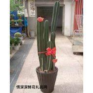 绿叶植物,避邪量天尺