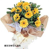 太阳菊,珍惜