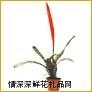 鲜花盆栽,红剑