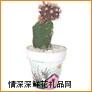 绿植盆栽,仙人球(黑)