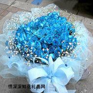 蓝色妖姬,爱的拥抱