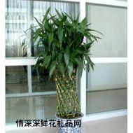 绿植盆栽,富贵竹笼