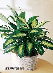 绿叶植物,一米阳光
