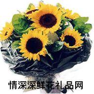 向日葵,你是我的太�