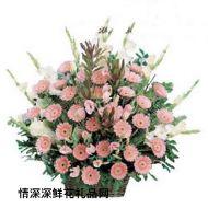 亲情鲜花,永远健康