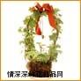 鲜花盆栽,长春藤