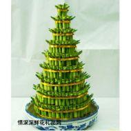 绿植盆栽,开运竹(大8层)