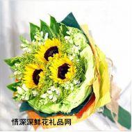 向日葵,阳光祝福