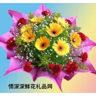 太阳菊,金色年华