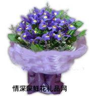 ��庸��r花,紫色浪漫