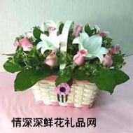 北京鲜花,春意
