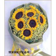 向日葵,光彩�Z目