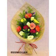 太阳菊,彩色世界