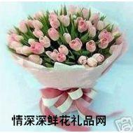 精品鲜花,最爱郁金香